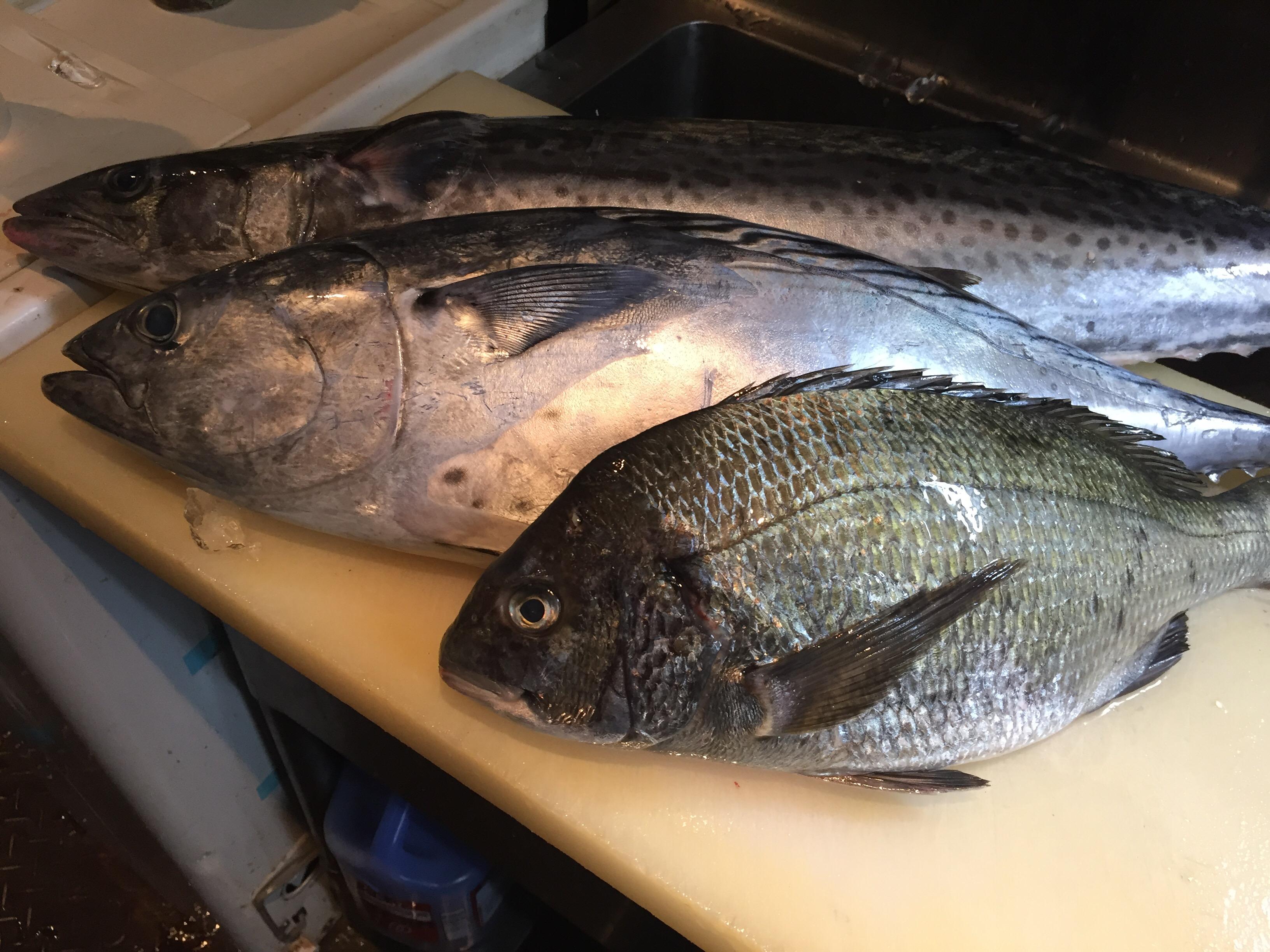 並木屋の魚
