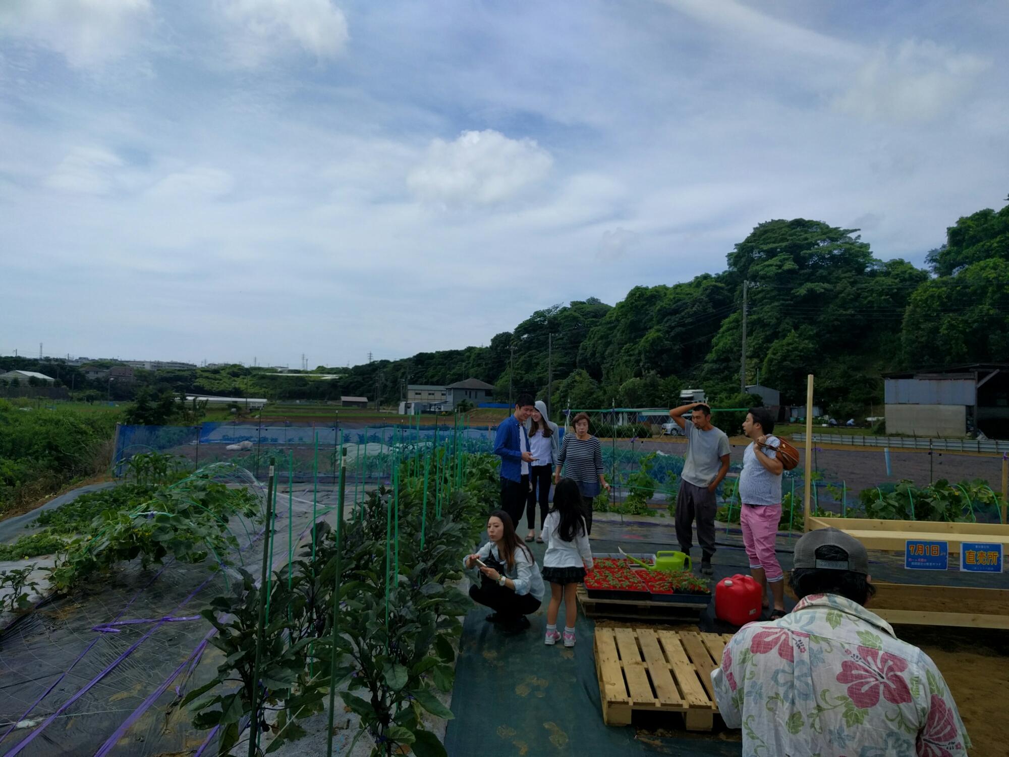 三浦野菜の農園見学